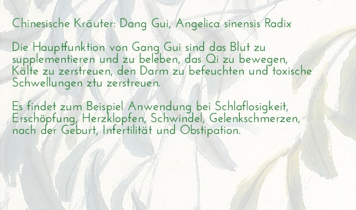 chinesisches-kraeuterlexikon-dang-gui-angelica-sinensis-radix