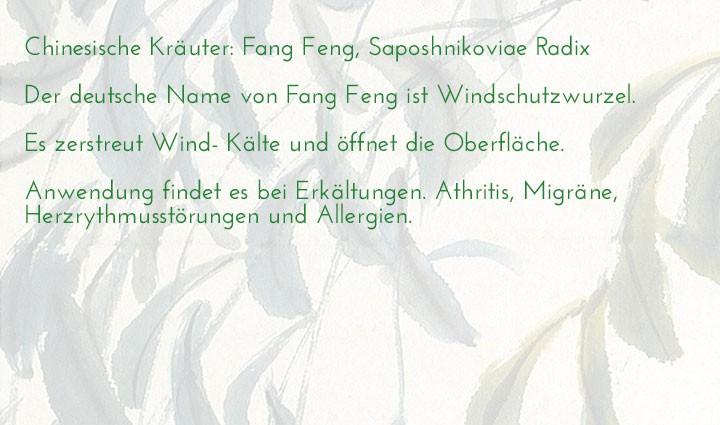 chinesisches-kraeuterlexikon-fang-feng-saposhnikoviae-radix