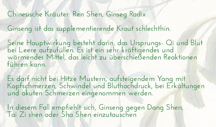chinesisches-kraeuterlexikon-ren-shen-ginseng-radix